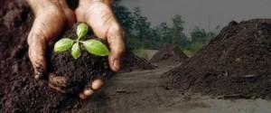 Analise de adubo orgânico