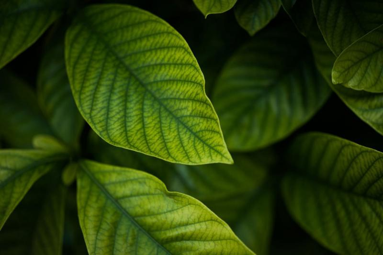 Analise de folhas