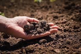 Analise de solo preço