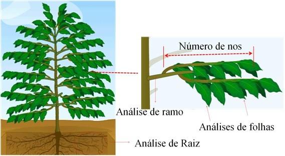 Analise tecido vegetal