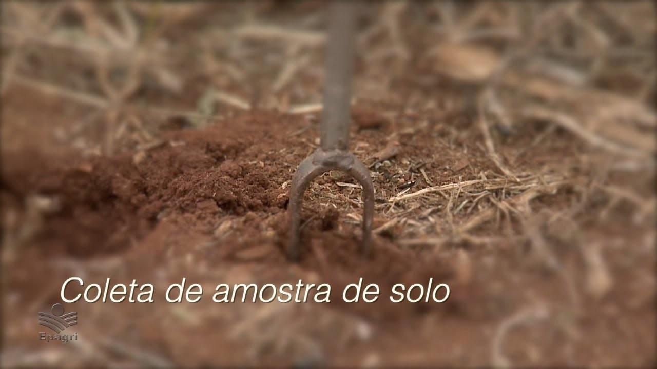 Coleta de solo para análise
