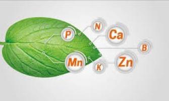 Analise foliar laboratório